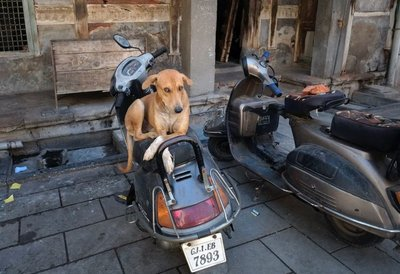 One of many sweet Indian dogs, Ahmedabad, Gujarat
