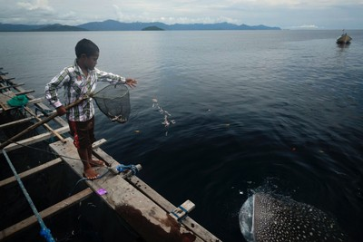 Bagan, fishing  platform, Nabire
