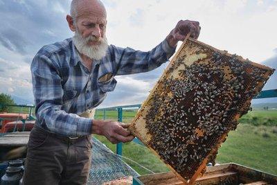 A beekeeper near Karakol