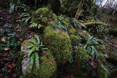 50 shades of moss