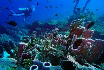 Diving, Rajat Ampat