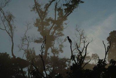 Birding in Sorong, West Papua