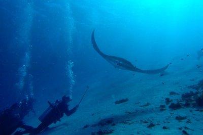 Swimming with Manta Rays, Komodo
