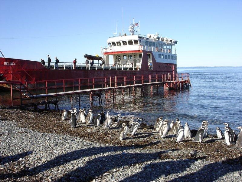 Penguins: Isla Magdalena, Chile