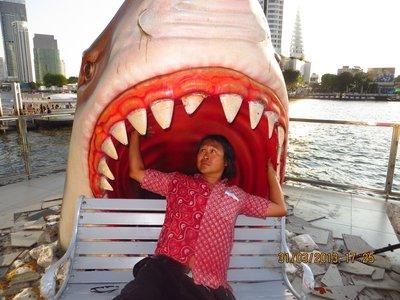 Ed eaten by shark