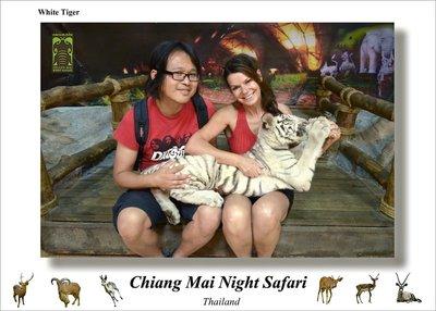 white_tiger3.jpg