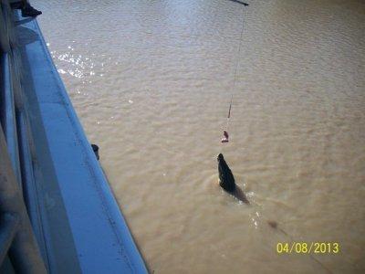 Adelaide River 1