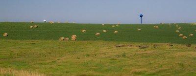 Hay Bale Mammoths