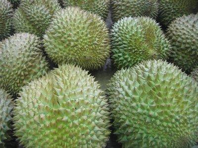 SV 2008 - Durians