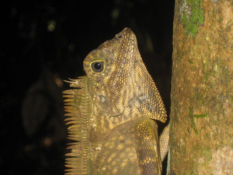 SV07 - Tabin - Lizard3
