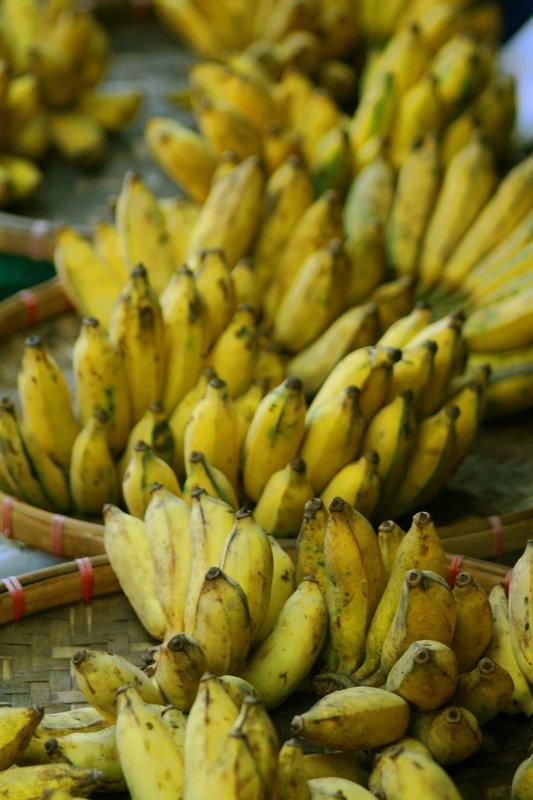 Winter Vacation 2008-2009 - Chiang Mai Bananas