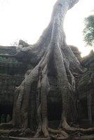 WV - Siem Reap TP5
