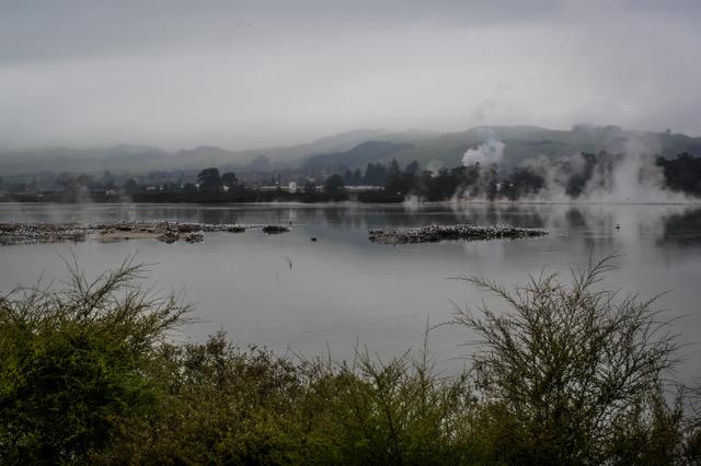 large_Rotorua-8058.jpeg