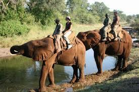 elephant_riding.jpg
