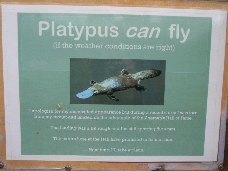 Flying platypus!