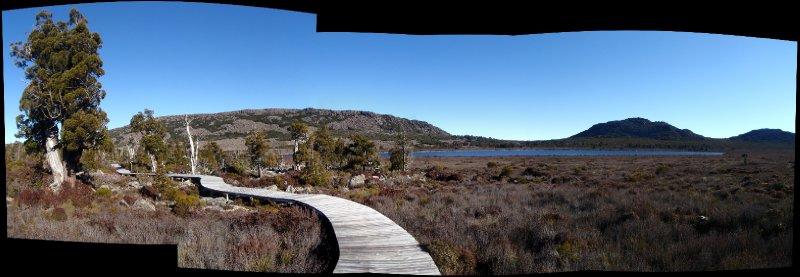 Pencil pine panorama