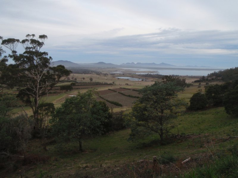 View over vineyard, Tasman Highway