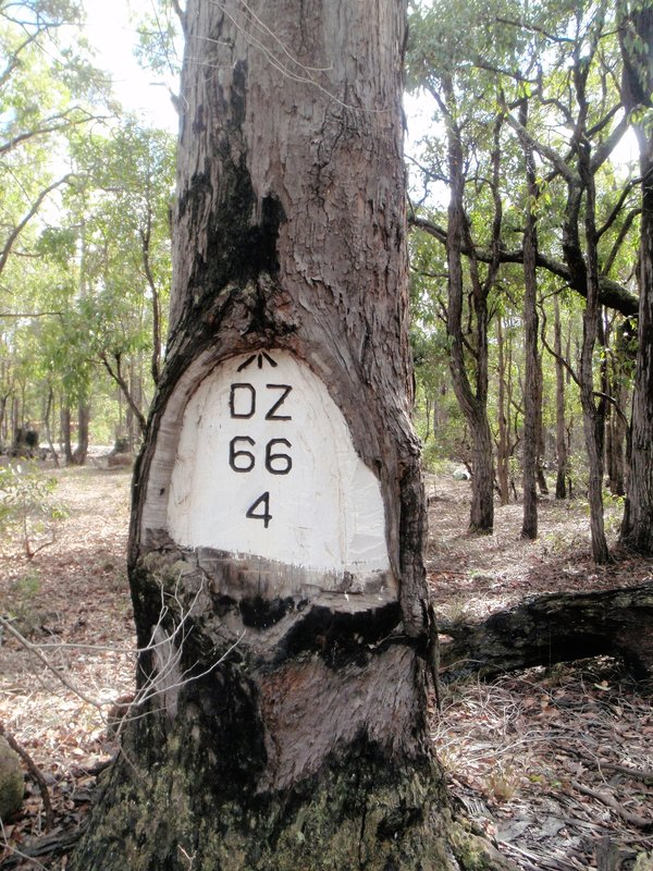 Survey reference tree