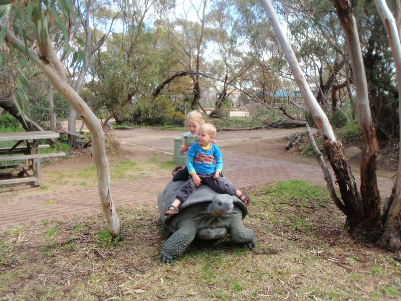 Riding the tortoise