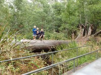 Log bridges are always fun!