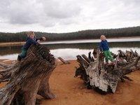 Tree stump fun