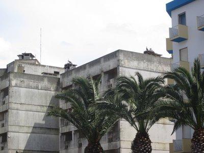 Lagos Portugal - Birds Rule.