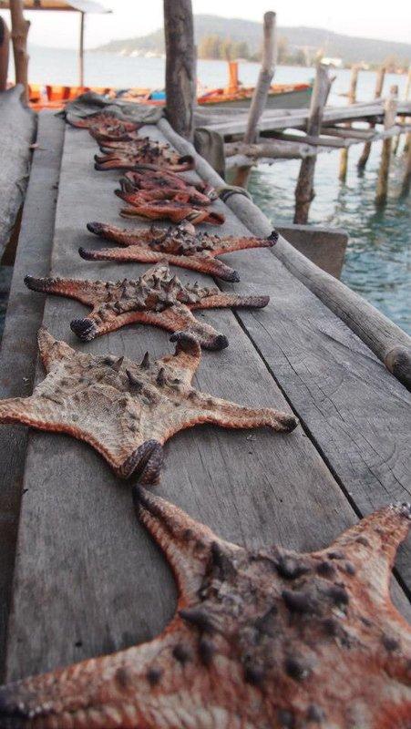 Seastars in a floating village