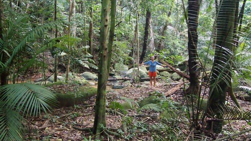 Jungle in Palau Tioman