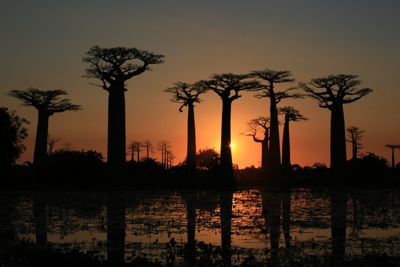 Sunset over the baobabs