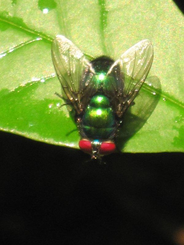 Jungle fly!