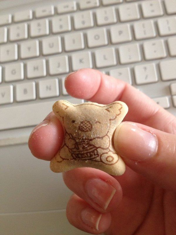 Koala Cookie