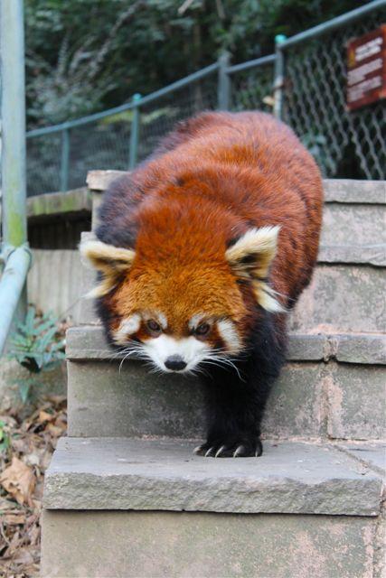 large_panda5.jpg