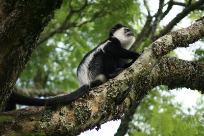 Picture_396-monkey2.jpg