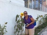 sunflower in Porto
