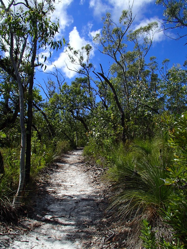 Cooloola Sandpatch trail
