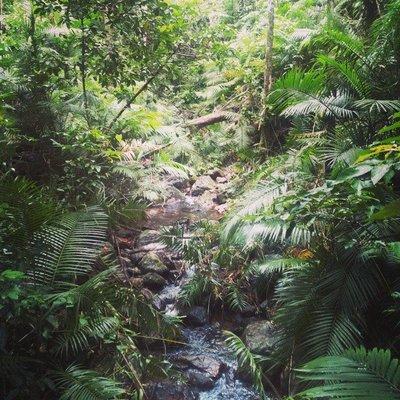Lost_in_th.._Rainforest.jpg