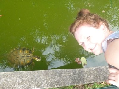 Tortoises in the pond