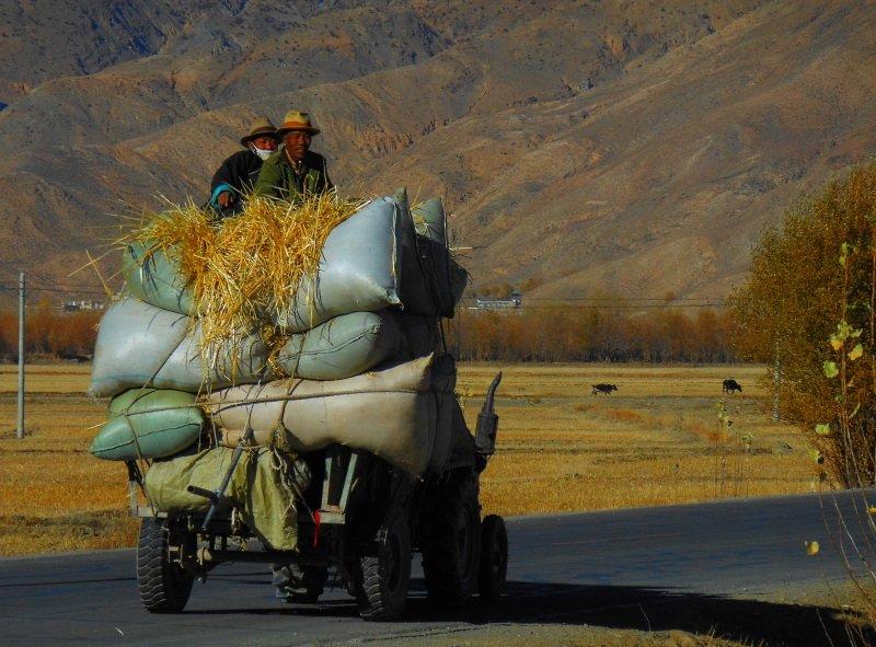 Tibetan Farmers
