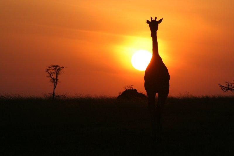 Daybreak in the Serengeti, Tanzania