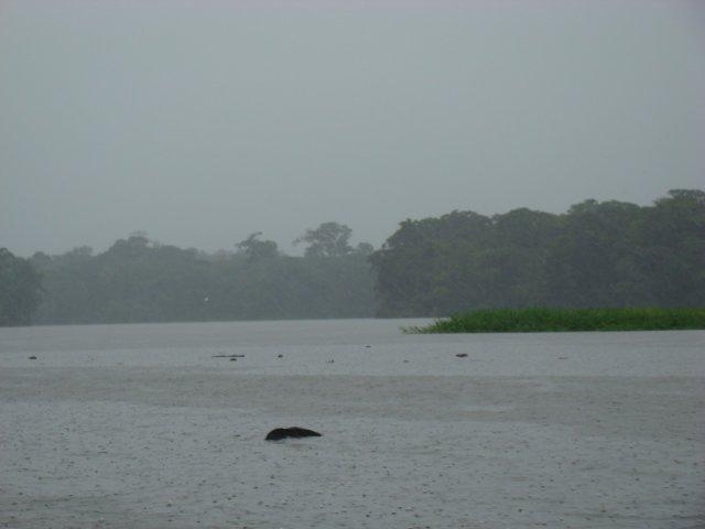 Lake Tortuguero