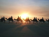 Camels on Cable Beach Broome