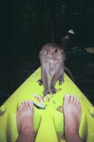 A monkey on my boat!!!!!!!!!!!!!!11