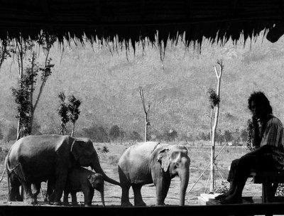 Mahout and elephant family