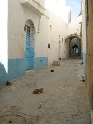 Cats in the Medina
