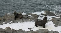 furries at rothera