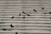 Pigeons sun them selves on the steps