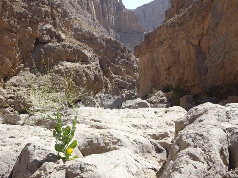 Au coeur du canyon