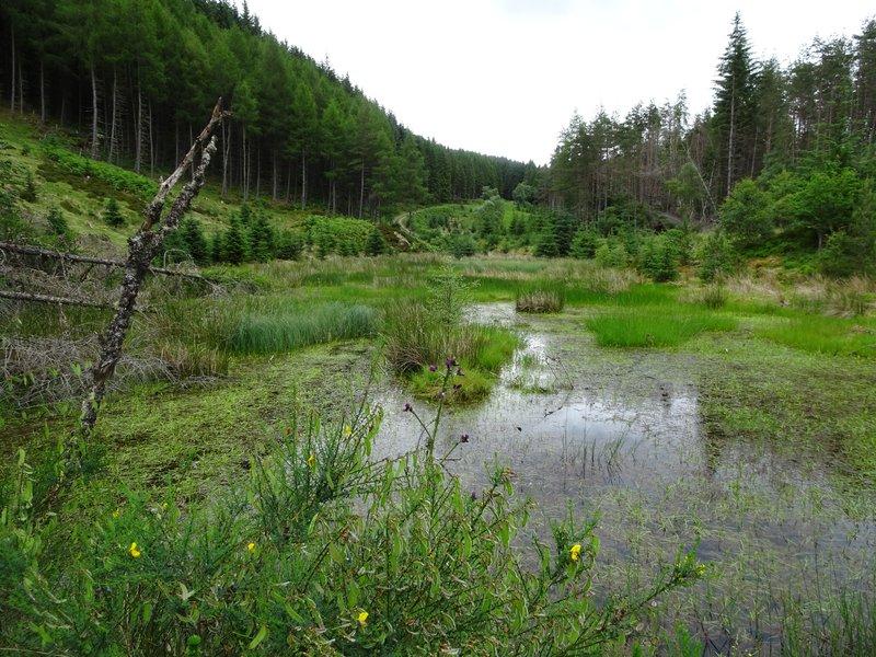 Grampians forest