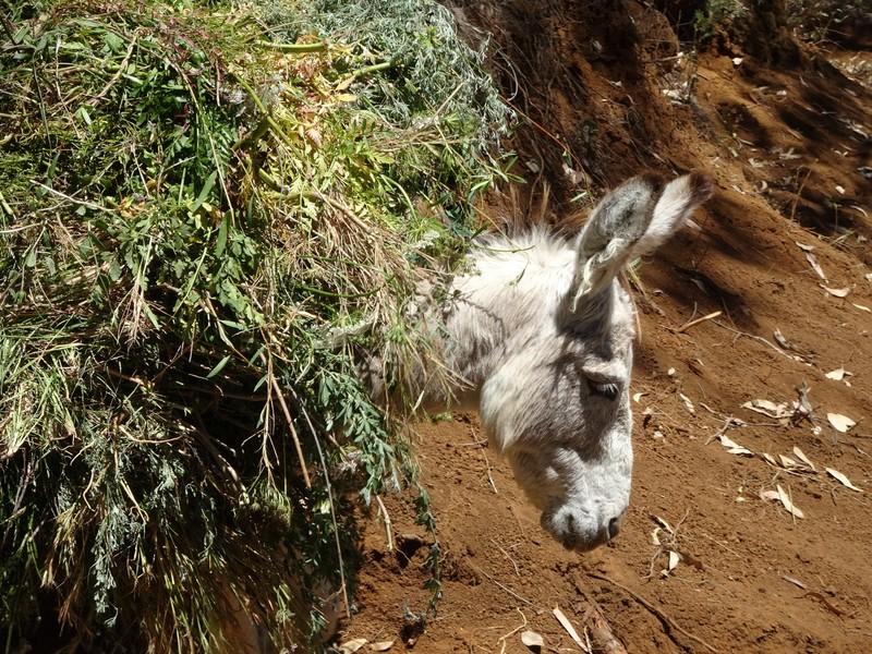Petit âne bien chargé
