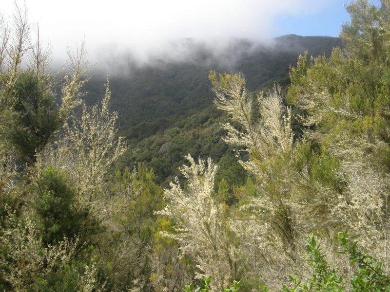 Brume au Gajaronay